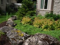 Mossy Weathered Limestone boulders retaining a flower bed